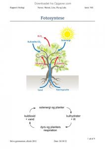rapport om fotosyntese
